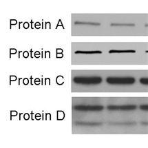 蛋白技术服务