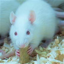 动物新物体识别实验