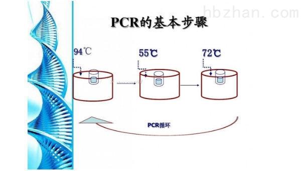 PCR检测试剂盒.jpg