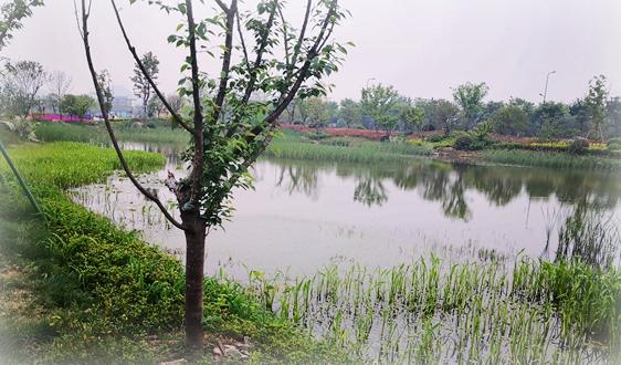 展望2035年,安徽綠色江淮美好家園建設目標基本實現