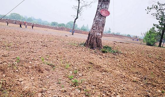 粵北南嶺山區山水林田湖草生態保護修復試點已投資71億 年底可完成主體工程42個
