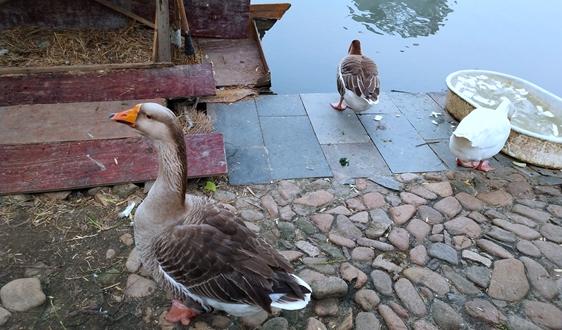 《山西省農村生活污水處理設施運行管理辦法(試行)》