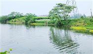 《白洋淀生态环境治理和保护条例》全文发布 4月1日起实施