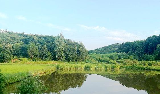 IIGF观点 | 构建市场化、多元化长江流域横向生态保护补偿机制建议