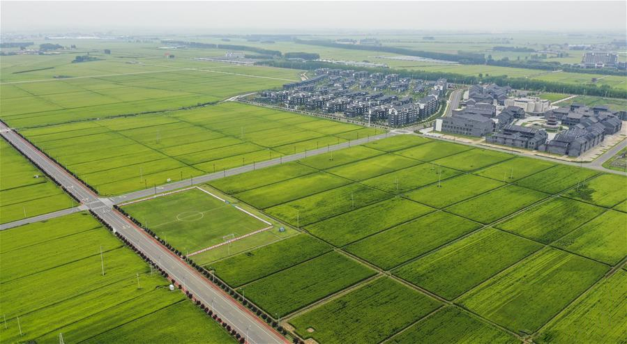 智易时代助力稻田环境监测