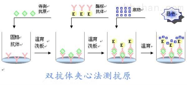 <strong><strong>小鼠角化细胞内分泌因子(KAF)elisa试剂盒</strong></strong>